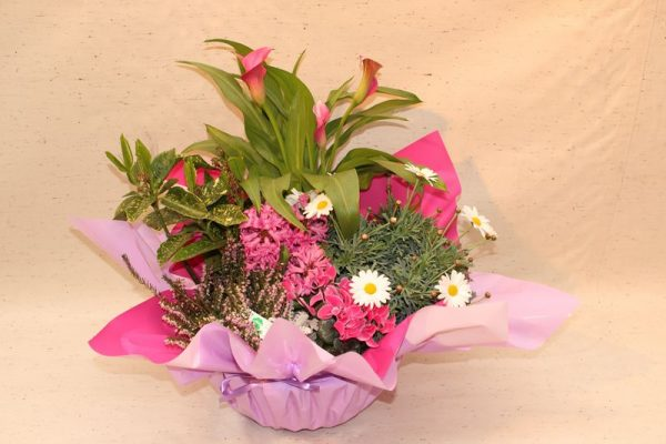 fleurs, plantes, nicolas, fleurs nicolas, fleuriste, oloron sainte marie, fleuriste oloron, bouquet, mariage, livraison, livraison fleurs,