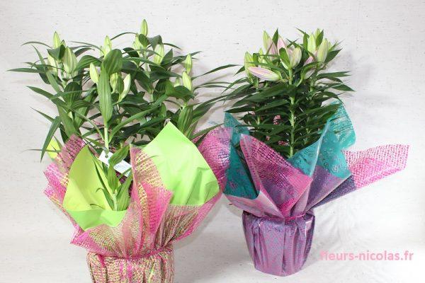 fleurs, nicolas, fleurs nicolas, fleuriste, oloron, fleuriste oloron, bouquet, mariage, livraison, livraison fleurs,deuil